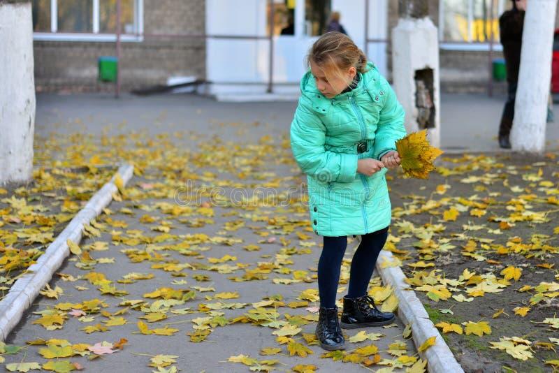 Uma menina em um revestimento verde recolhe as folhas amarelas no outono fotos de stock royalty free