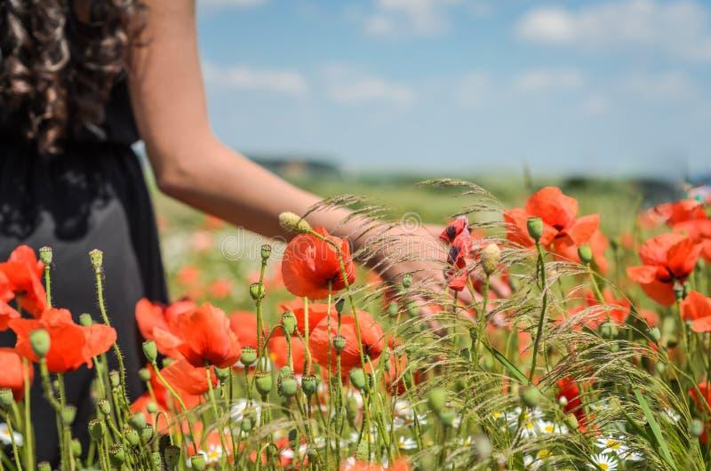Uma menina em um vestido preto está andando ao longo do campo com papoilas em um dia ensolarado brilhante imagem de stock