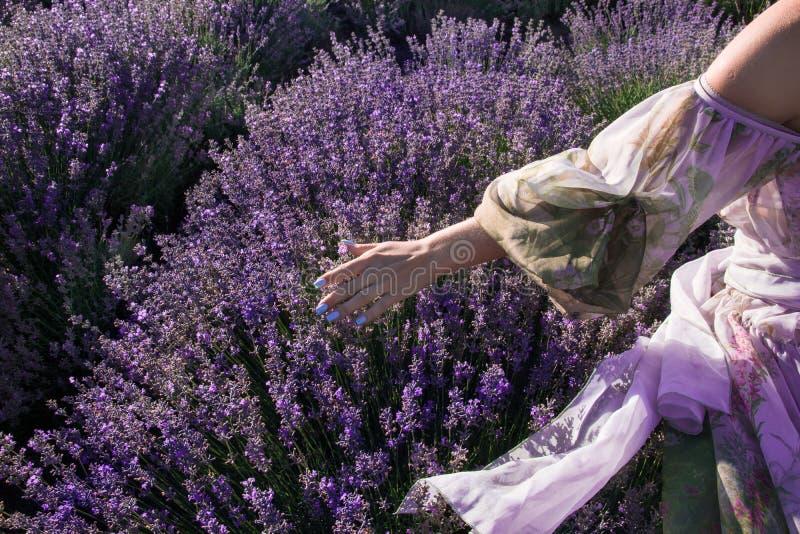 Uma menina está andando em um campo da alfazema no verão fotografia de stock