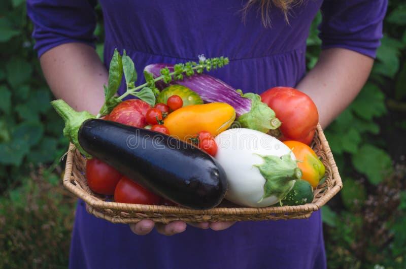 Uma menina está levando recentemente escolheu vegetais orgânicos no jardim imagens de stock
