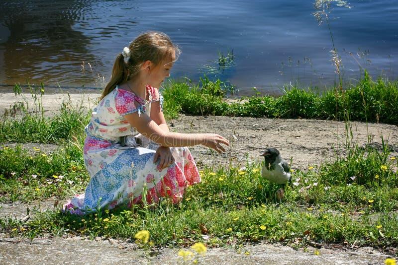 Uma menina está sentando-se pela água e alcança para fora a um corvo pequeno imagens de stock royalty free