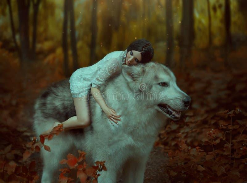 Uma menina frágil que monta um lobo, como a princesa Mononoke Beleza de sono O Malamute do Alasca é como um lobo selvagem E imagem de stock