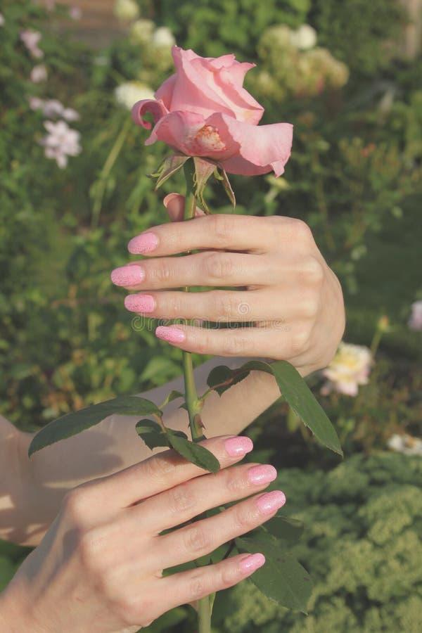 Uma menina guarda a flor da rosa do rosa pelas mãos com beauti fotos de stock royalty free