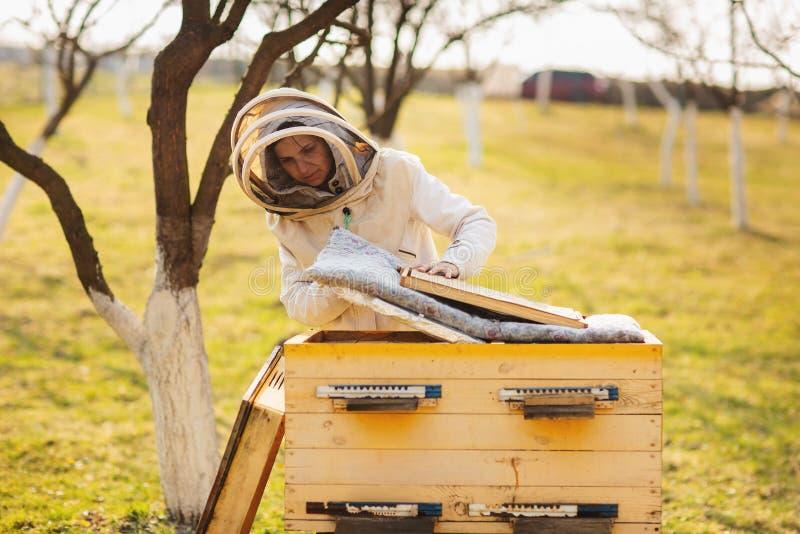 Uma menina nova do apicultor est? trabalhando com abelhas e colmeias no api?rio, no dia de mola fotografia de stock