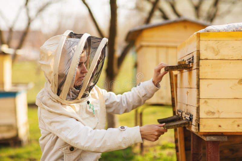 Uma menina nova do apicultor est? trabalhando com abelhas e colmeias no api?rio, no dia de mola foto de stock royalty free