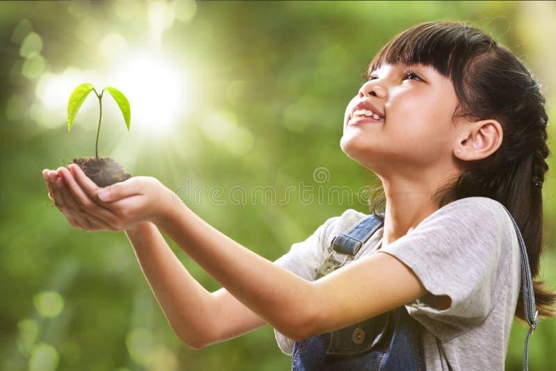 Uma menina que guarda uma planta nova em suas mãos com uma esperança do bom ambiente imagens de stock royalty free