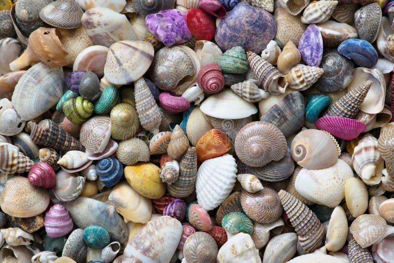 Uma mistura de escudos coloridos do mar imagens de stock royalty free
