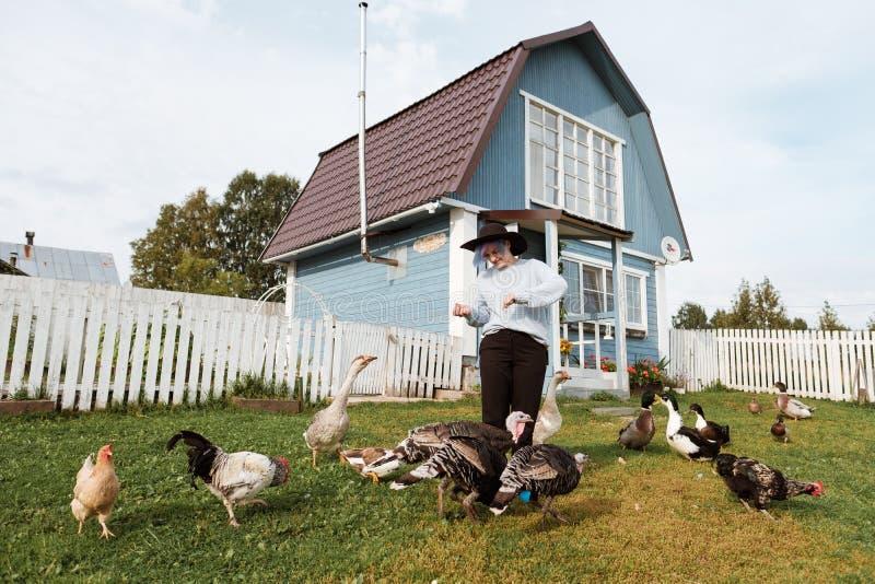 Uma moça alimenta pássaros domésticos, patos, galinhas, gansos, perus na jarda de uma casa rural fotografia de stock