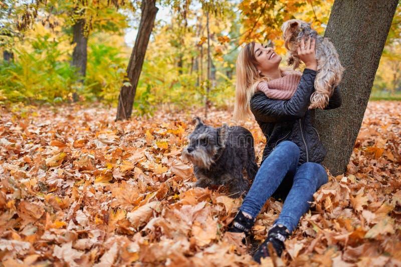Uma moça está jogando com os cães no parque nas folhas amarelas outdoors fotografia de stock