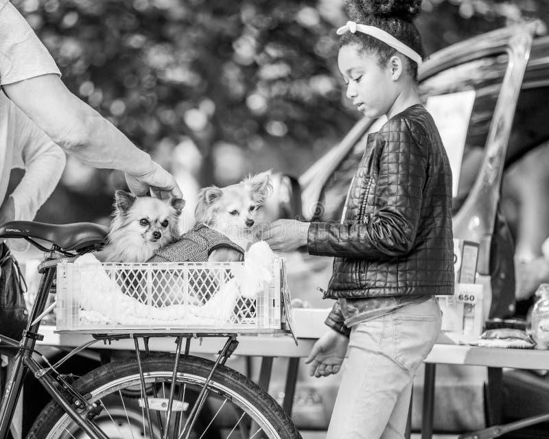 Uma moça que afaga cães em uma cesta da bicicleta no parque em uma exposição de cães foto de stock royalty free