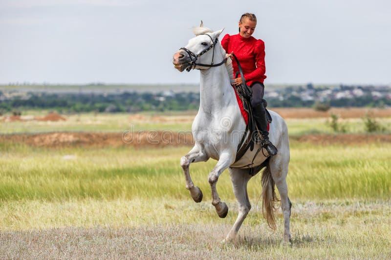 Uma moça treina o cavaleiro para executar conluios em cavalos e põe sobre seus pés traseiros de seu cavalo imagem de stock