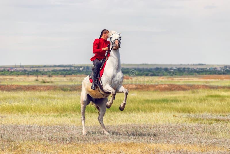Uma moça treina o cavaleiro para executar conluios em cavalos e põe sobre seus pés traseiros de seu cavalo fotos de stock