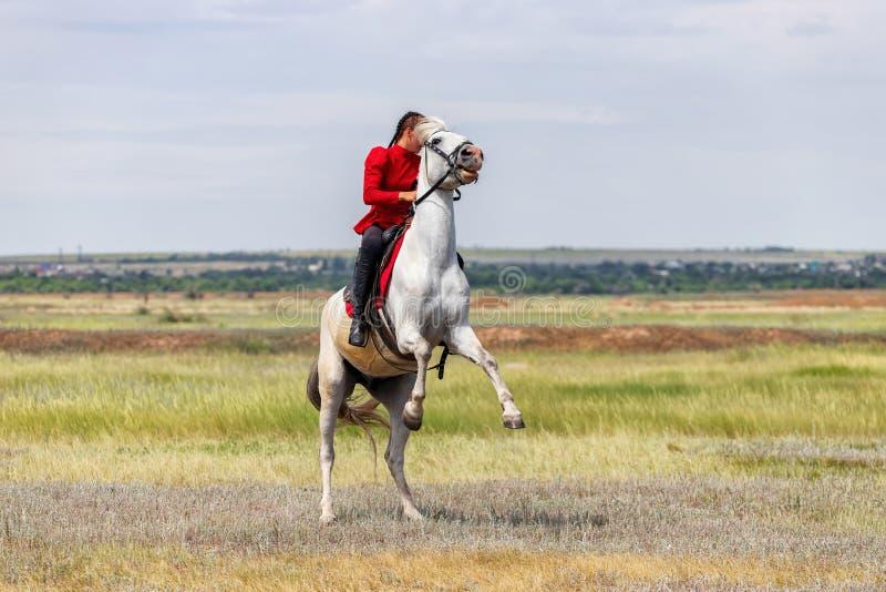 Uma moça treina o cavaleiro para executar conluios em cavalos e põe sobre seus pés traseiros de seu cavalo imagens de stock royalty free