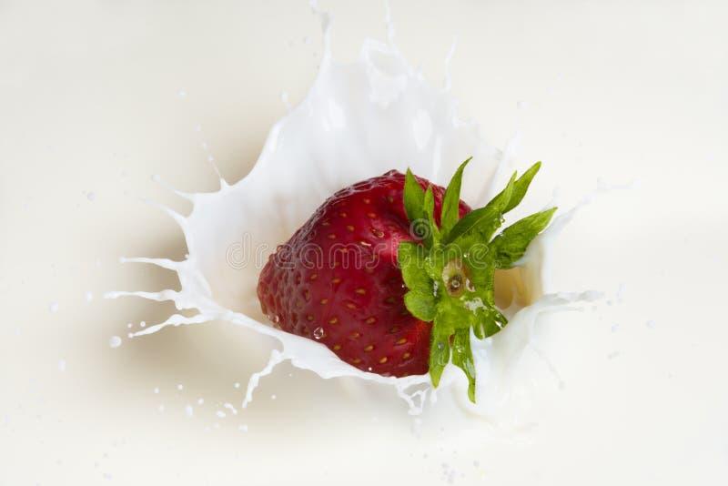 Uma morango que espirra no leite foto de stock royalty free