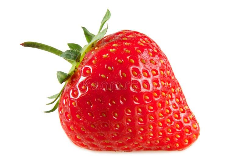 Uma morango vermelha. foto de stock royalty free