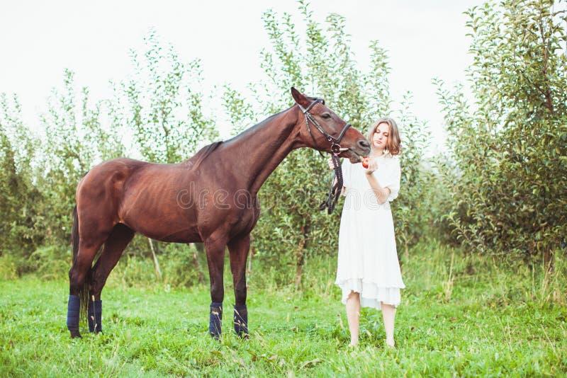 Uma mulher alimenta um cavalo foto de stock