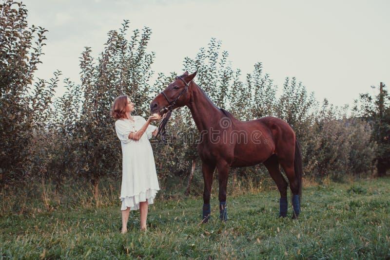 Uma mulher alimenta um cavalo foto de stock royalty free
