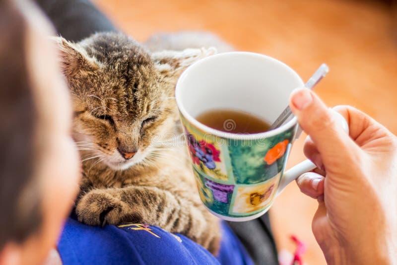 Uma mulher bebe o chá e guarda-o nas mãos de um cat_ fotos de stock royalty free