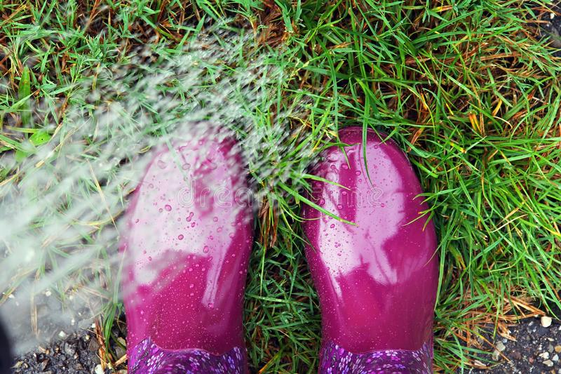 Uma mulher com as botas de borracha que molham o gramado com uma lata molhando e suas botas fotos de stock