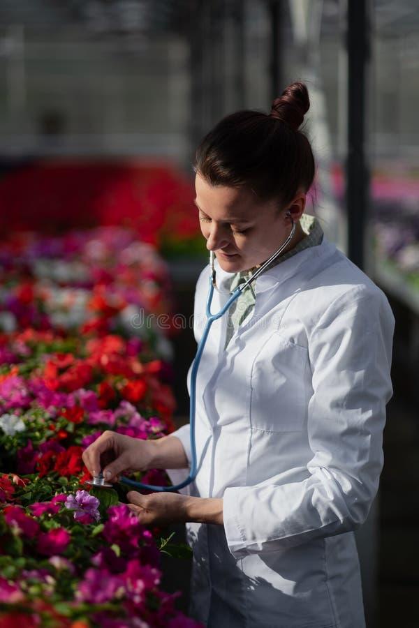 Uma mulher do biólogo do cientista em um revestimento branco importa-se e testa-se as flores na estufa foto de stock royalty free