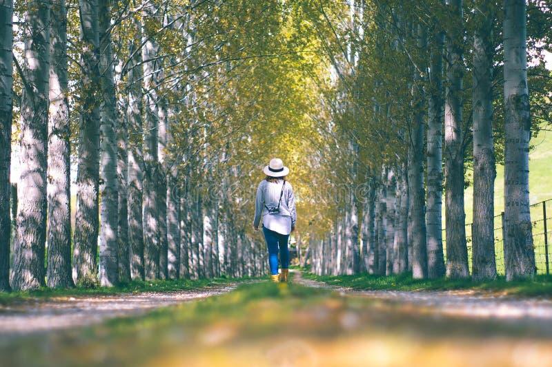 Uma mulher do viajante anda na maneira média da caminhada de pinho verde para fotos de stock