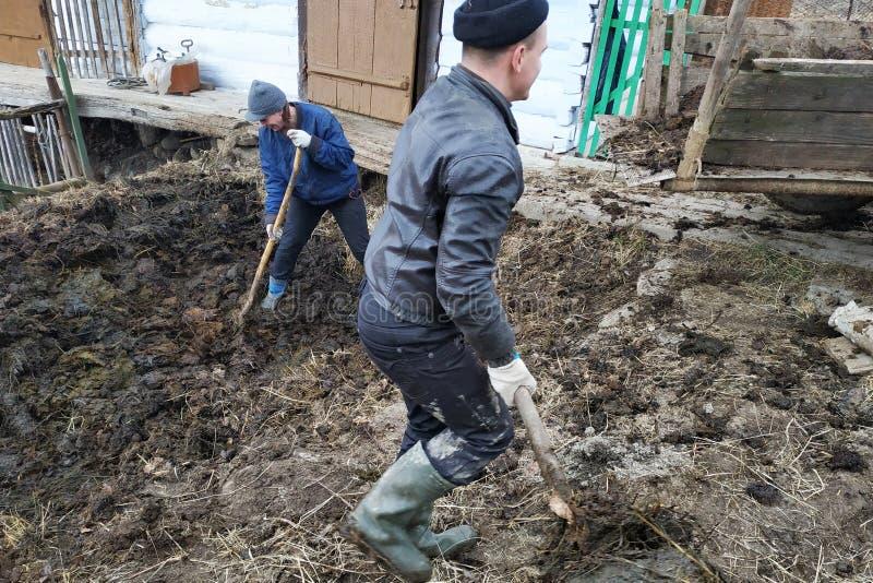 Uma mulher e um homem perto do celeiro para vacas escolhem o estrume de um poço para fertilizar o solo no jardim, a ação ocorrem foto de stock