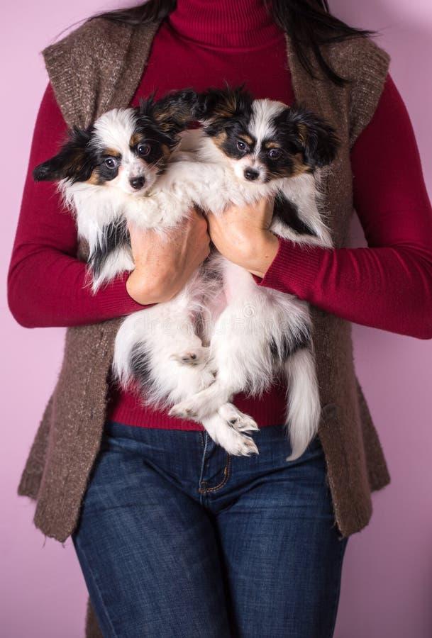 Uma mulher está guardando um par de cachorrinhos fotografia de stock