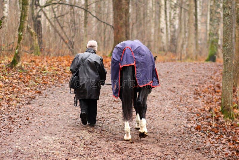 Uma mulher idosa e um cavalo imagem de stock