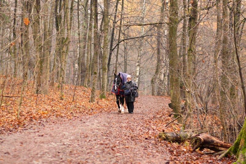 Uma mulher idosa e um cavalo para uma caminhada no parque do outono imagem de stock royalty free