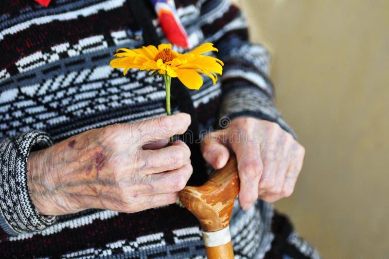 Uma mulher idosa que guarda uma flor amarela e um bastão de madeira em um dia de verão no patamar fotos de stock
