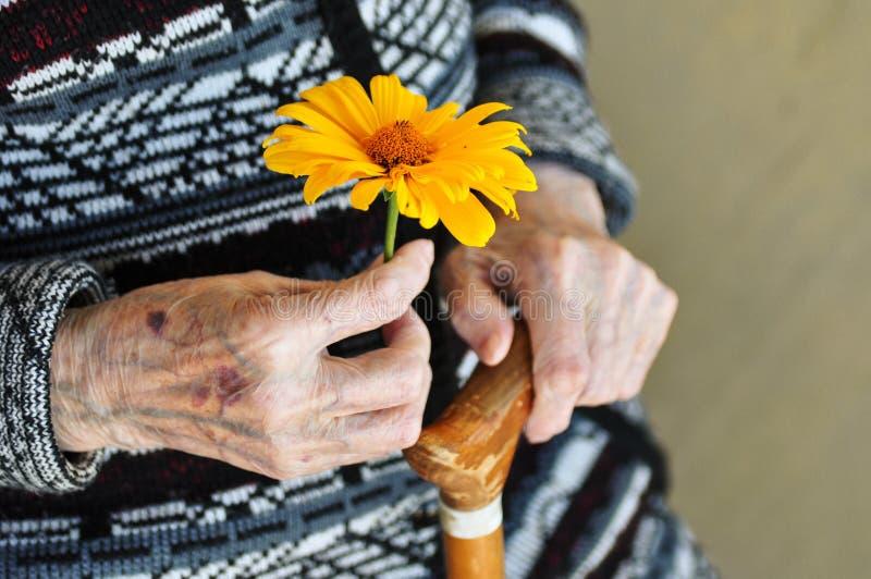 Uma mulher idosa que guarda uma flor amarela e um bastão de madeira em um dia de verão no patamar imagem de stock