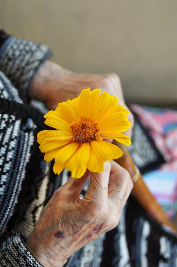 Uma mulher idosa que guarda uma flor amarela e um bastão de madeira em um dia de verão no patamar imagem de stock royalty free