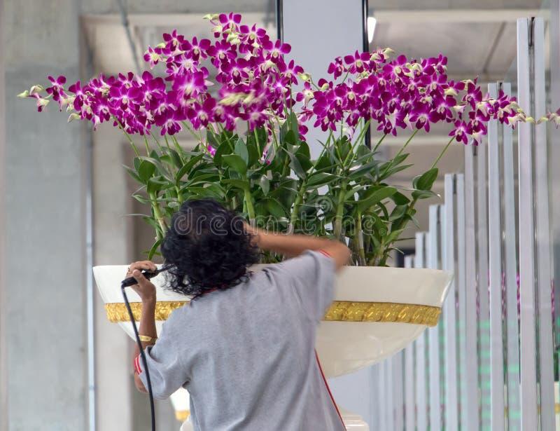 Uma mulher importa-se com flores em um grande potenciômetro de flor imagens de stock royalty free