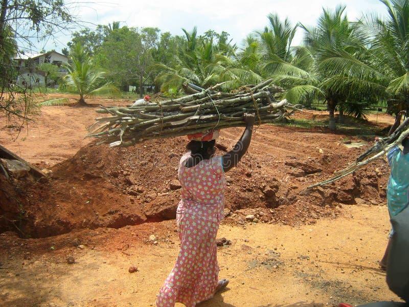 Uma mulher leva a lenha em sua cabeça fotografia de stock