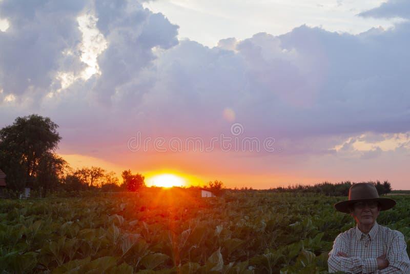 Uma mulher mais idosa olha o por do sol no final do dia fotografia de stock