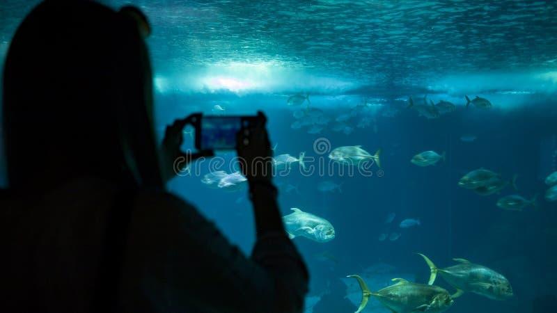 Uma mulher que faz a foto dos peixes através do vidro no aquário foto de stock royalty free