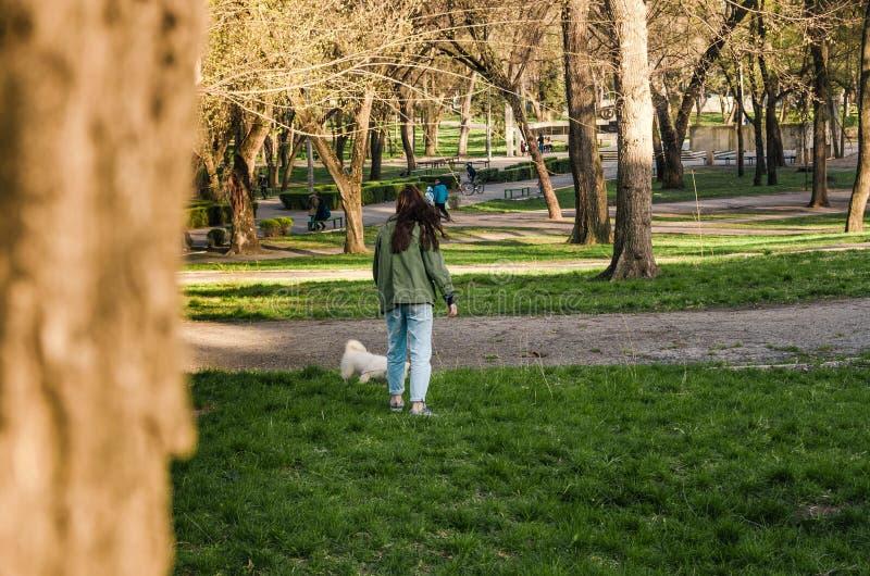 Uma mulher que joga com um cão no parque imagens de stock royalty free