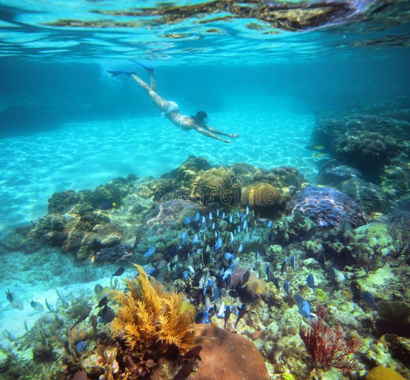 Uma mulher que mergulha no recife de corais bonito com lotes dos peixes fotografia de stock royalty free