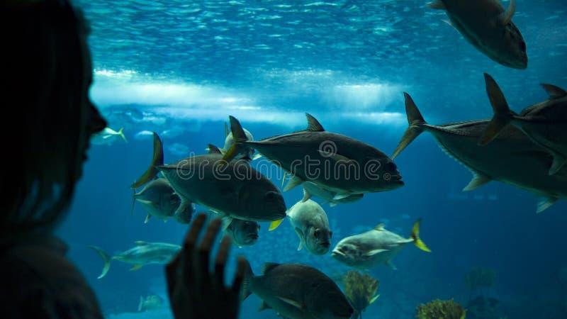 Uma mulher que olha peixes sob a água através do vidro fotografia de stock royalty free