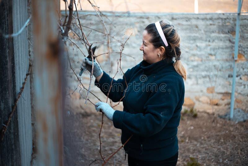 Uma mulher que trabalha duramente no vinhedo da vila foto de stock royalty free