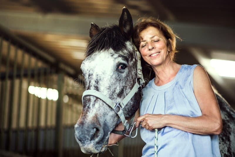 Uma mulher superior que está perto de um cavalo em um estável, guardando o foto de stock