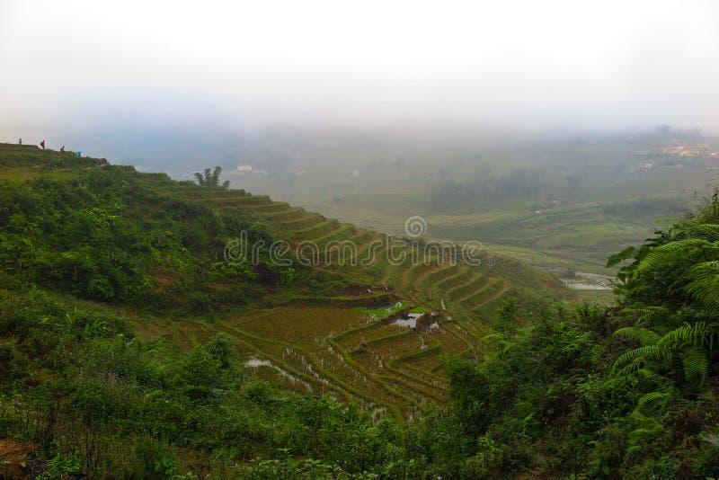 Uma névoa que cobre os ricefields em Sapa, Vietname fotografia de stock