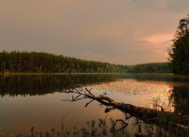 Uma noite está em Letónia 2016 foto de stock royalty free