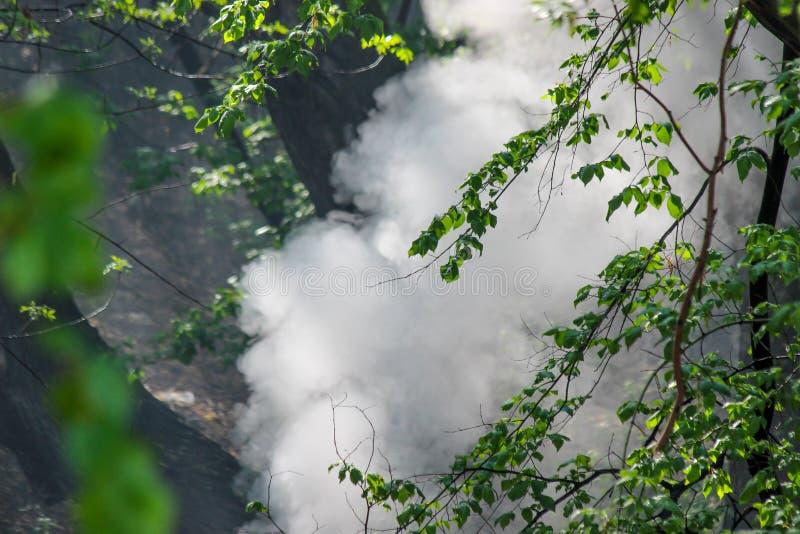 Uma nuvem de fumo branca densa grande nas madeiras fotos de stock royalty free