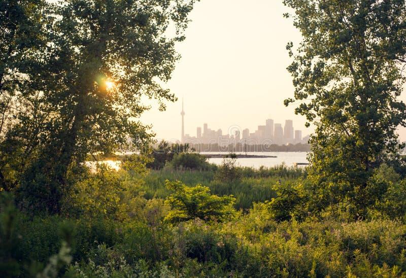 Uma opinião atrasada do dia de Toronto do centro através das árvores imagens de stock royalty free
