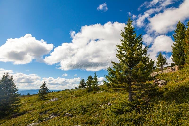 Uma opinião da paisagem da floresta verde bonita fotos de stock