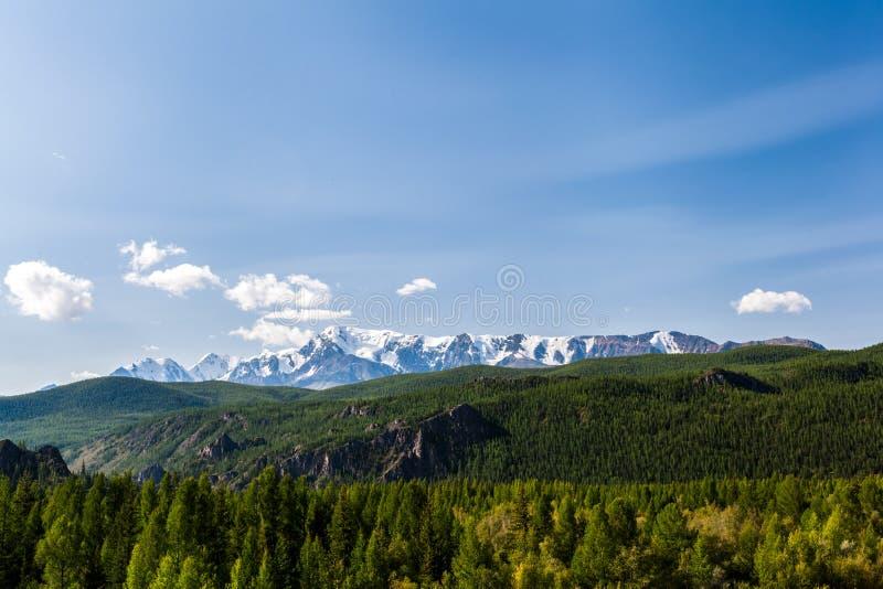 Uma opinião da paisagem da floresta verde fresca bonita fotos de stock