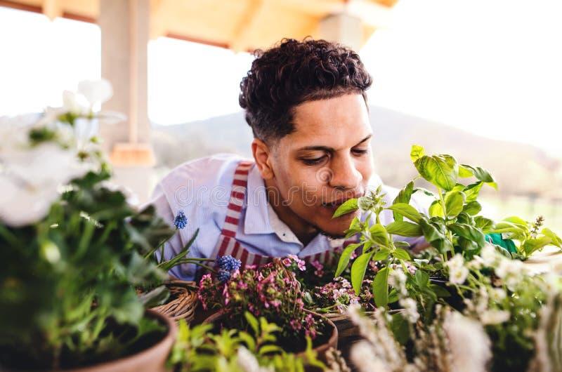 Uma opinião dianteira o jardineiro do homem novo fora em casa, plantando flores imagem de stock royalty free