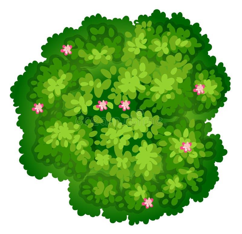 Uma opinião do birdeye de uma planta ilustração do vetor