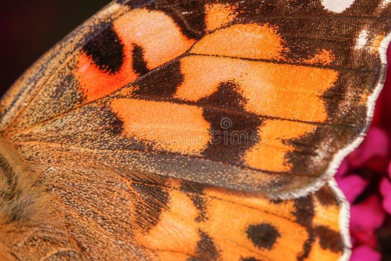 Uma opinião em uma asa alaranjada da borboleta, textura agradável do close-up - tiro macro fotografia de stock royalty free